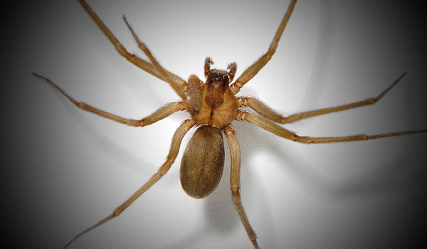 Fox Valley WI Spider and Pest Spraying Service